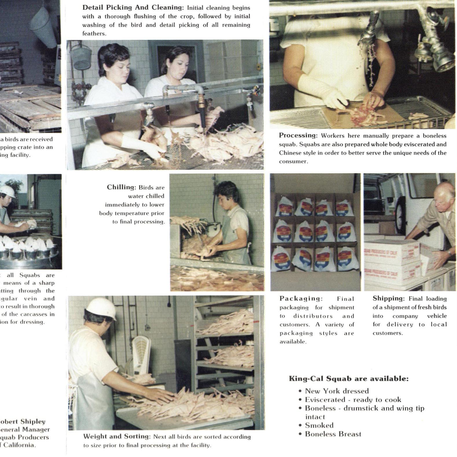 1981. Photos from our Hayward processing plant.
